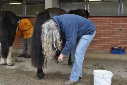 Pferd für Hippotherapie vorbereiten