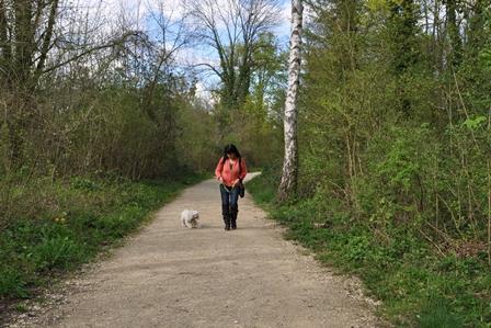 Hunde spazieren führen